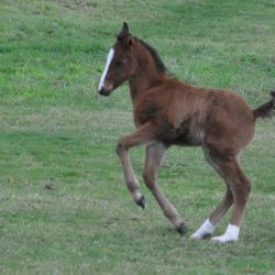 Early-season foals may not be ideal, study findings suggest