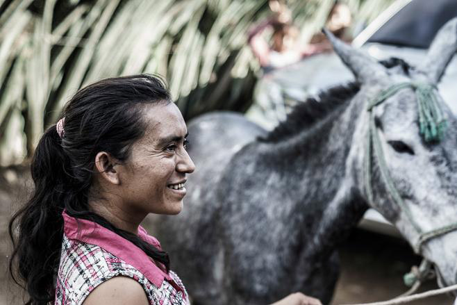 Guatemala's 250,000 equines make it the most densely populated country for working equines in Central America. © Enrique Urdaneta