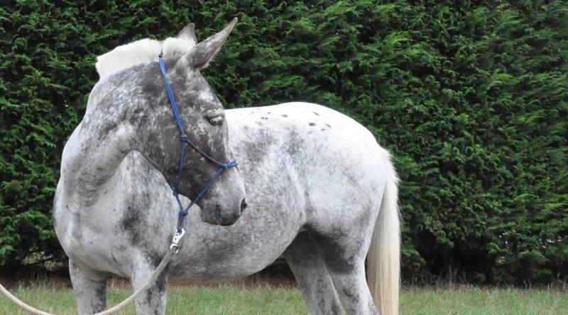 mule800