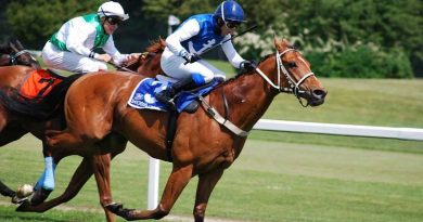 """Scientists work towards """"mathematical model"""" for preventing leg fractures in racehorses"""