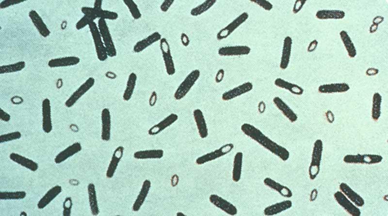 clostridium-botulinum-via-cdc-800x445