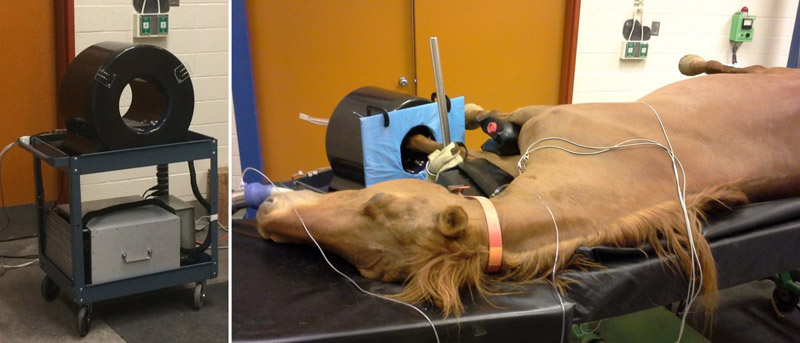The photo on the left shows the portable PET scanner used for equine PET imaging. On the right, the left foot of a horse is being imaged with the system.