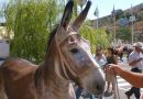 Donkeys' aptitude for therapy work assessed by researchers