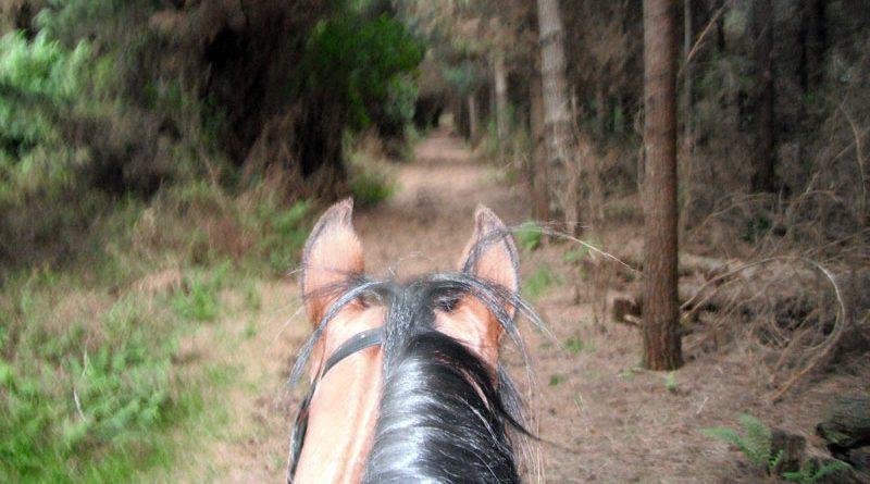 endurance-trail2