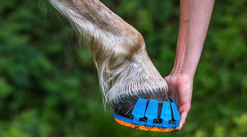 Horseshoes are to protect their hooves