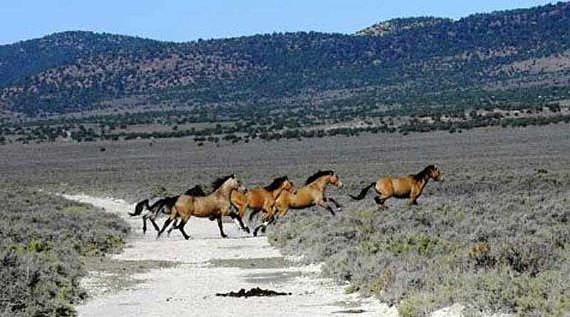 blms wild horse management essay Rtf suggested reforms to blm wild horse and burro program  strategies for  genetic management of feral horse populations on public lands in the united.