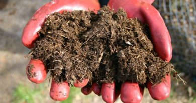 Horse manure: Researchers explore composting and other treatment methods