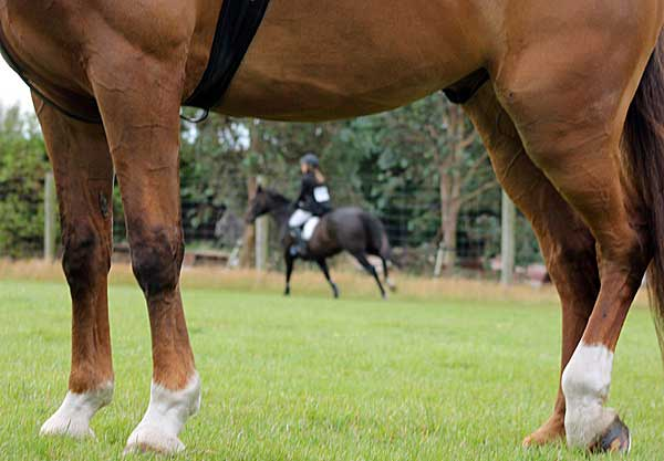 horsetalk.co.nz - Horsetalk.co.nz - Gene therapy shapes up as a potent new tool to repair tendon injuries in horses