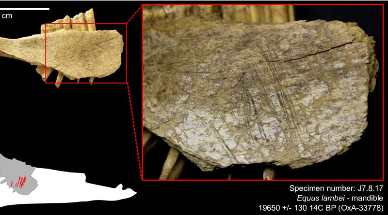 Evidence of horse hunting in North America pushed back to nearly 24,000 years ago