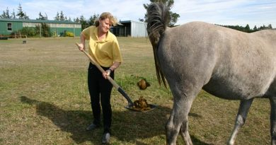 Gone with the wind: Horse flatulence under scrutiny in lab experiment