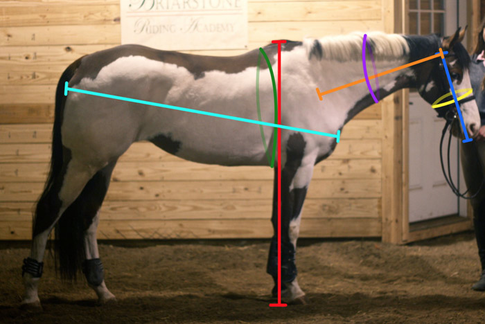 Measurements for the survey on horse and rider size and shape for the USEA's Collapsible Fence Study.