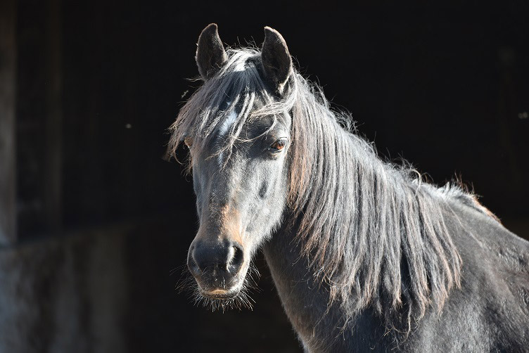 Helen will live out her days at the Redwings Sanctuary, thanks to the charity's suppor
