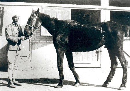 Old Bill – one of the first war horses rescued by Dorothy Brooke in 1931.