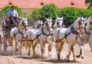 Home of Kladruber horses to seek UNESCO world heritage status