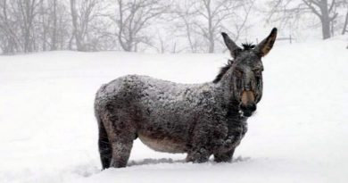 World Horse Welfare and The Donkey Sanctuary are working together to help the equines stranded in snow in Abruzzo.