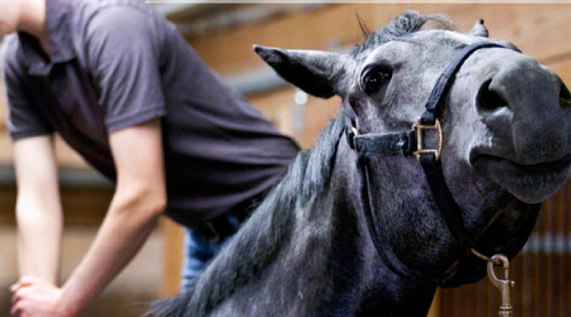 Equine care 101: Complementary therapies for horses