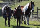 Major safety review for Australian horse industry
