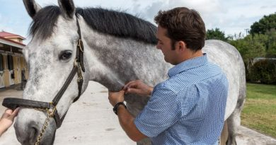 There are procedures in place to help keep horses that suffer reactions on a systematic vaccination plan without threatening their health or competition schedules.