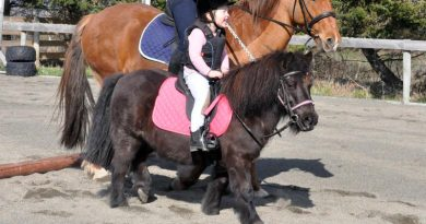 Got a horse-mad youngster? Get the gen before they get in the saddle
