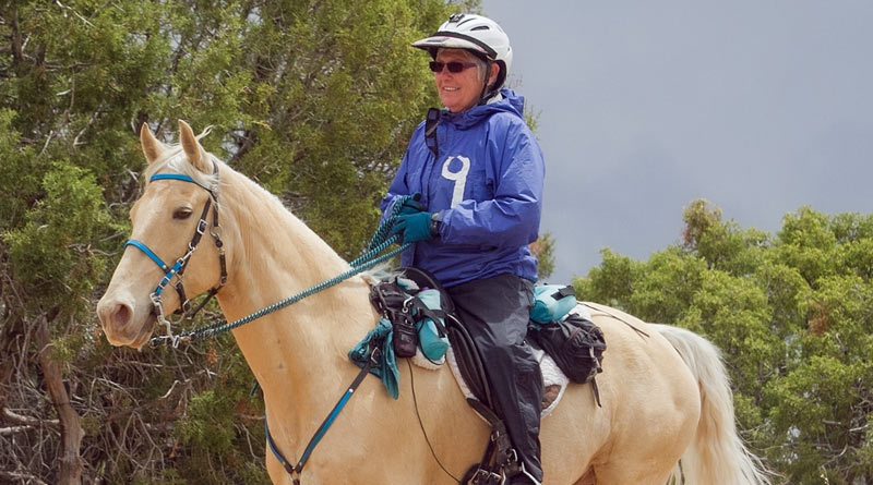 """Gaited horse Hooch is US trail riding's new """"golden boy"""""""