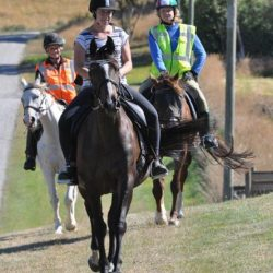 Half of survey respondents saw no personal health and safety issues in their horse pursuits