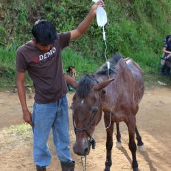 Long trek for Third World horses to better care