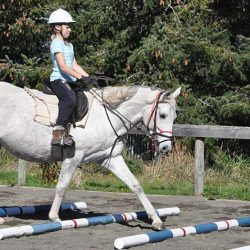 Too many riders are saddling their horses with problems, research suggests