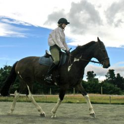 Dominance must not be a part of horse training, say equitation scientists