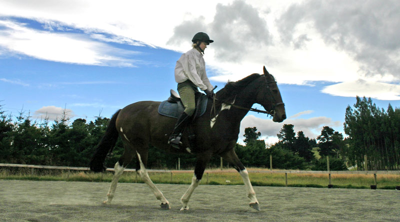 Repeated studies show shortcomings among riders in identifying lameness in horses