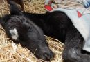 Gone too soon: Life lessons from a newborn foal