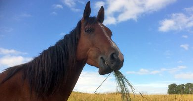Core bacteria in the gut of horses showed some stability over time in study