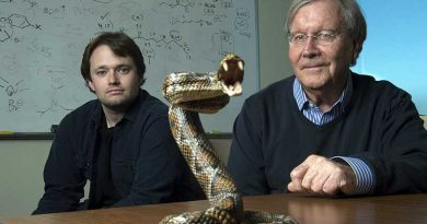 New gel could spell end of using horses in production of snake anti-venoms