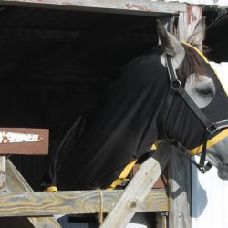 Study tracks real-time contact between horses and humans
