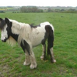 Doris is now recovering in the care of World Horse Welfare. Photos: World Horse Welfare