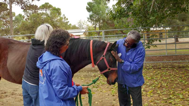 """Being around horses has brought back a lot of happy memories for Richard Driver. """"I'm more conscious of my environment and my emotions while with horses,"""" he says. Photo: Elaine Chan"""
