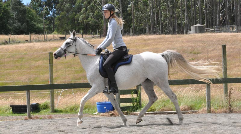 How do Arabian horses respond to exercise on a genetic level? Researchers in Poland have examined the question.