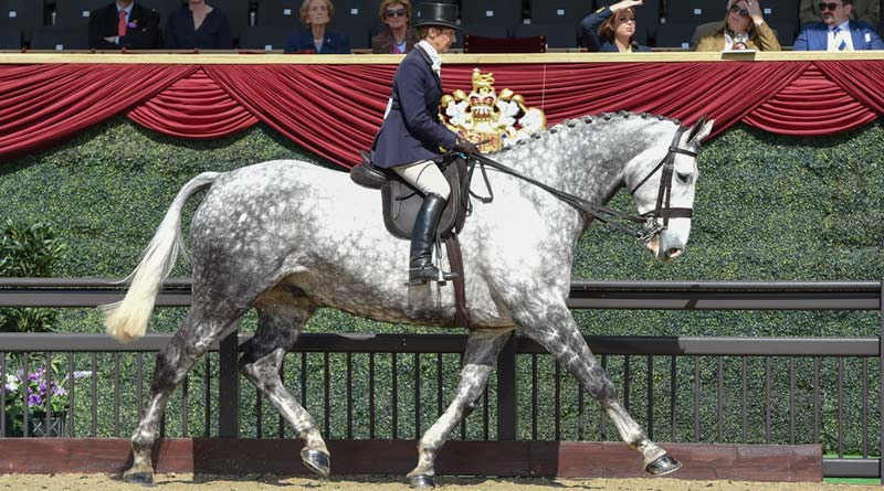 Bloomfield Excelsior and Jayne Ross, winners of The Cuddy Hunter Championship at the Royal Windsor Horse Show.