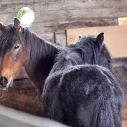 Into the light: Locked up ponies learn to enjoy their freedom