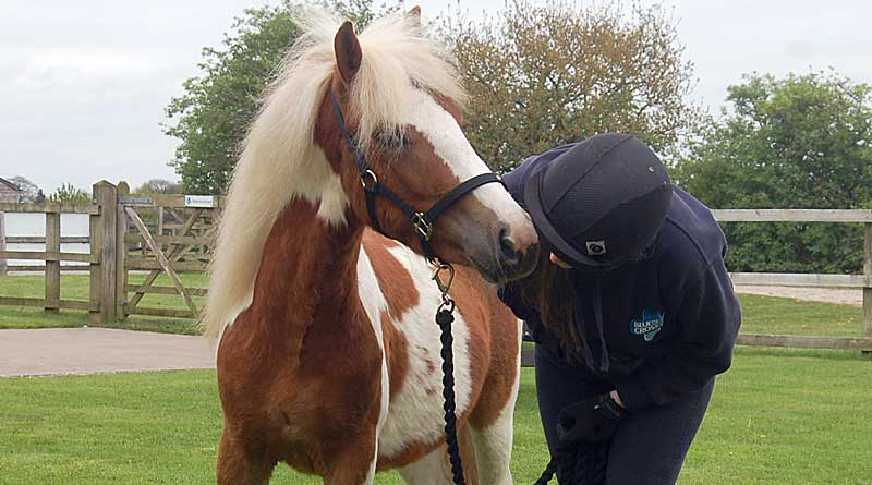 The backing of Blue Cross's rehoming campaign by the Pony Club will be a boost for ponies like Fowey, above, and Jamaica, below. Photos: Blue Cross