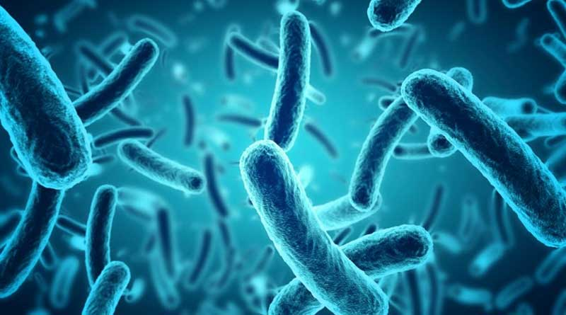 The organisms that cause diarrhea are mostly bacteria –Salmonella and Clostridium difficile are among the most common.