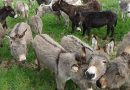 Supporters rally to raise €43,000 in two days for donkey refuge in Ireland