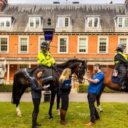 Mounted police horses get the once-over for this year's National Equine Health Survey.