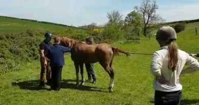 The 32-year-old horse following its rescue. Photo: Leicestershire Fire & Rescue / Facebook