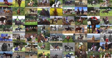 Some of the thousands of former racehorses in new careers with their owners in Britain.