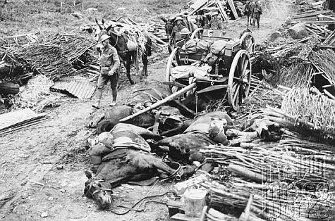 WWI took a terrible toll on both animal and human lives.