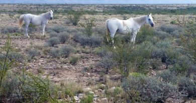 No evidence of overpopulation of wild horses on western rangelands has been found, advocates say.