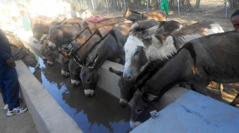 """A new water trough at Shalla Woreda in Ethiopia, funded by Brooke's """"Buy a Donkey a Drink"""" appeal."""