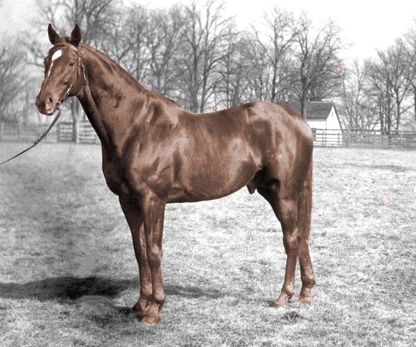 "Does your horse look like Man o' War? A contest is under way top find a double of ""the mostest horse that ever was""."
