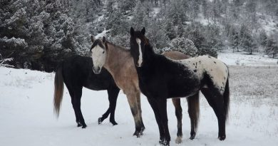 Wild horses: An indicator of our human condition