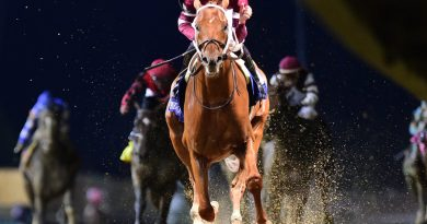 Genetic basis for the athleticism of horses explored by researchers
